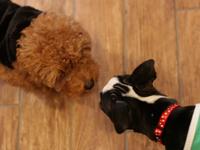 犬 吠える 噛み癖