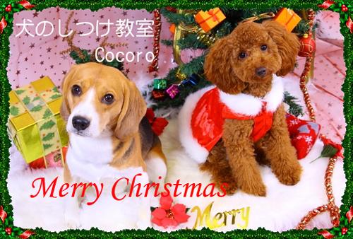 犬 クリスマスパーティ
