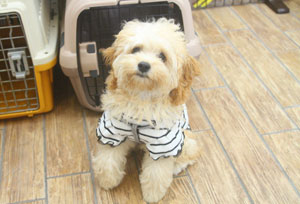 MIX犬 テルちゃん